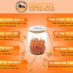 Đông trùng hạ thảo Sạch Himalaya là gì mà tốt đến vậy?