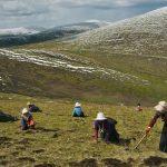 Cùng Himalaya tìm hiểu giá Đông Trùng Hạ Thảo Tây Tạng