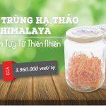 Đông Trùng Hạ Thảo Giá Rẻ Nhất Việt Nam – Chất lượng đảm bảo 100%